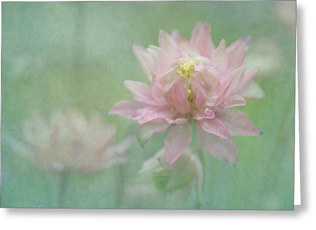Hybrid Columbine Greeting Card by Angie Vogel