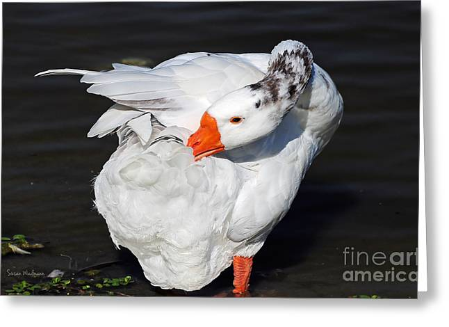 Hybrid Goose Grooming After A Swim Greeting Card