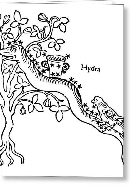 Hydra, Crater And Corvus Greeting Card by Granger