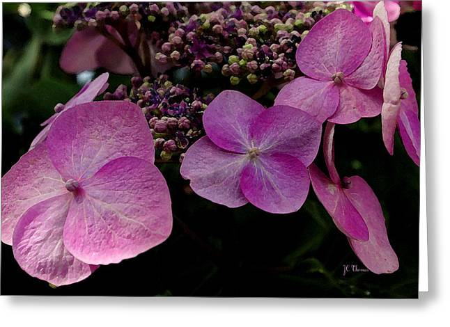 Greeting Card featuring the photograph Hydrangea Flowers  by James C Thomas
