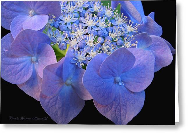 Hydrangea Blossom Macro Greeting Card