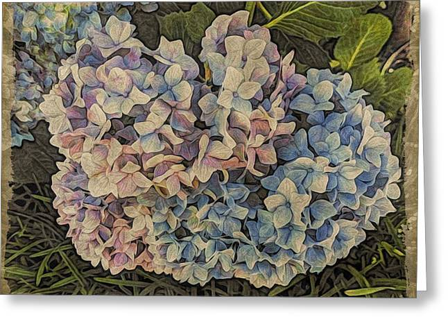 Hydrangea Blossoms Greeting Card
