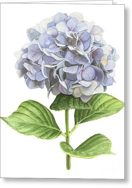 Hydrangea Greeting Card by Elizabeth R Smith