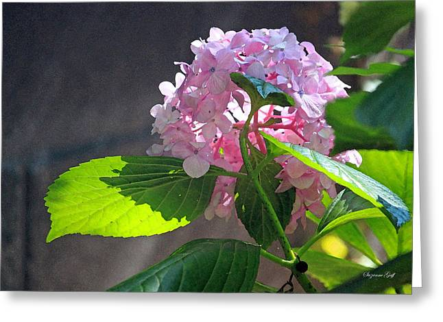 Hydrangea Heaven Greeting Card by Suzanne Gaff