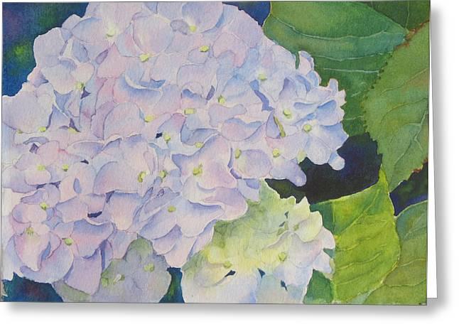 Hydrangea Greeting Card by Judy Mercer