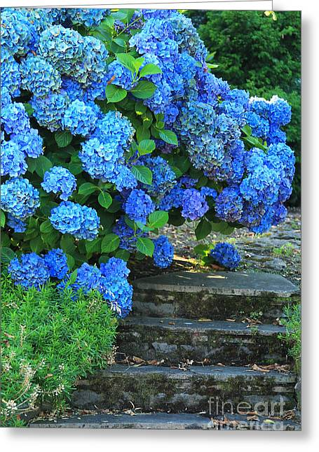 Hydrangea Steps 2 Greeting Card