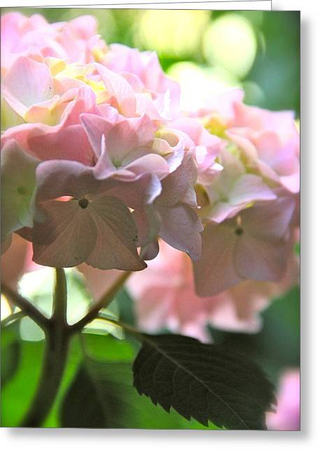 Hydrangea Greeting Card by Tracy Male