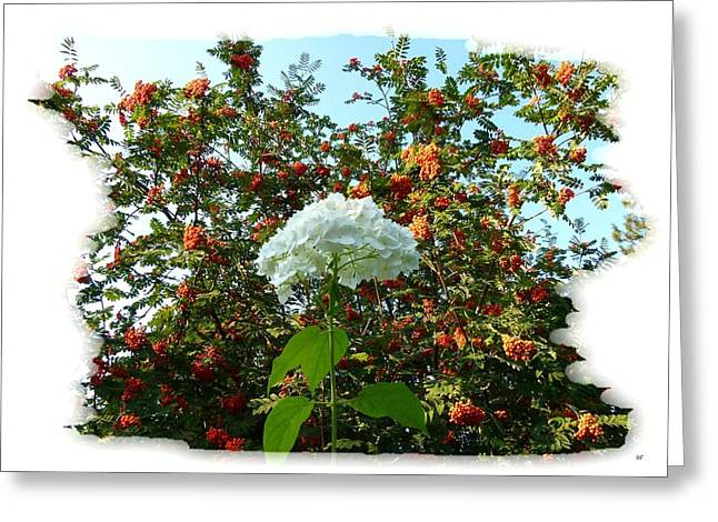 Hydrangea With Mountain Ash Greeting Card by Will Borden