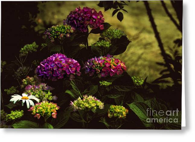 Hydrangeas In The Shade  Greeting Card by Elaine Manley