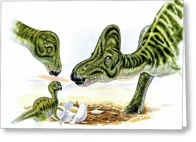 Hypacrosaurus Dinosaurs And Young Greeting Card by Deagostini/uig