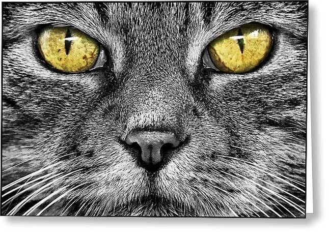 Hypnotizing Eyes Greeting Card by Adrian Campfield