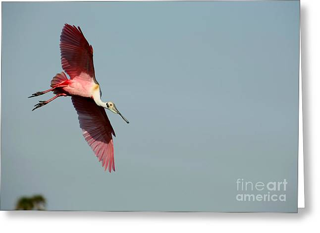 I Am Not A Pink Flamingo Greeting Card by Sabrina L Ryan
