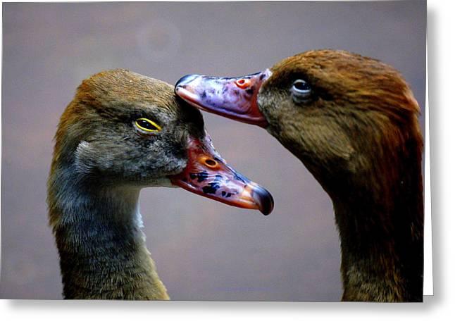 I Crown You Ducklet Greeting Card by DerekTXFactor Creative
