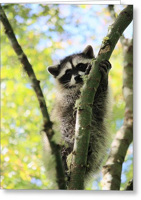 I Don't Want To Come Down Greeting Card by Kym Backland