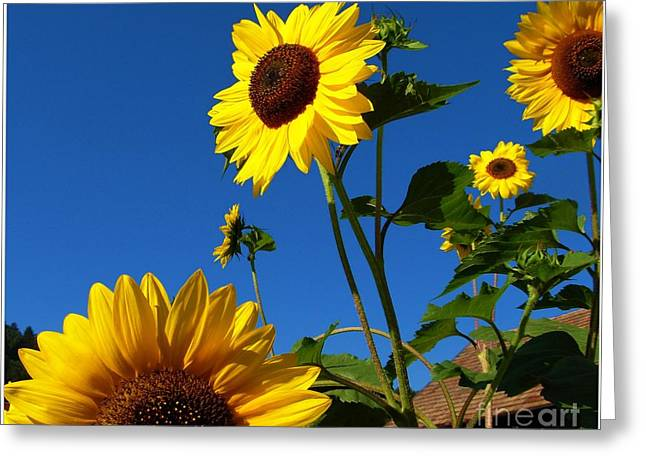 I Girasoli Dietro Casa Mia - Sunflowers In The Field Behind My House. Greeting Card by Mariana Costa Weldon