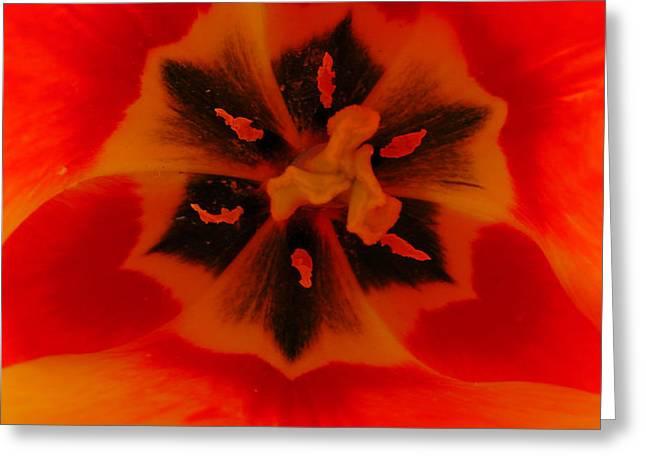 I Have A Dream... Into A Tulip. Greeting Card by Sascha Kolek