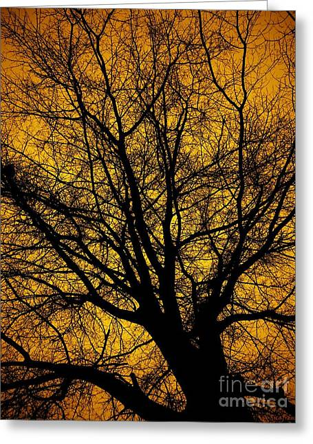 I Love Bare Trees Greeting Card by Christy Ricafrente