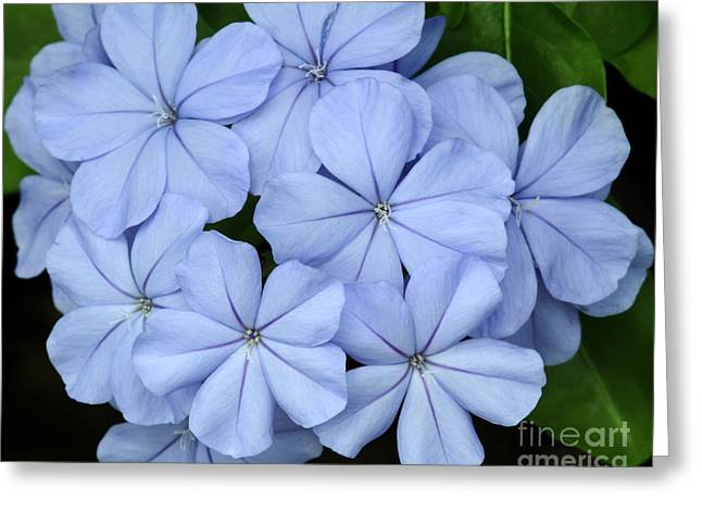I Love Blue Flowers Greeting Card