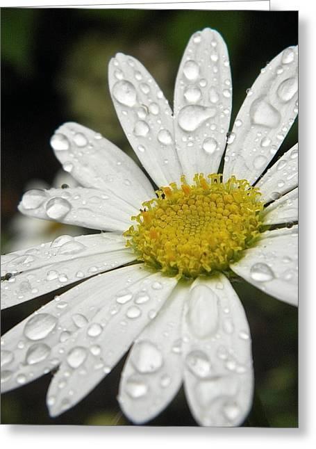 I Love Rainy Daisies Greeting Card by Marijo Fasano