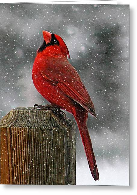 I Love Snow..... Greeting Card by Judy  Johnson