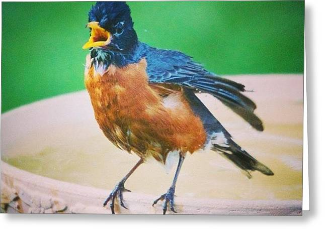 Bathing Robin Greeting Card by Heidi Hermes