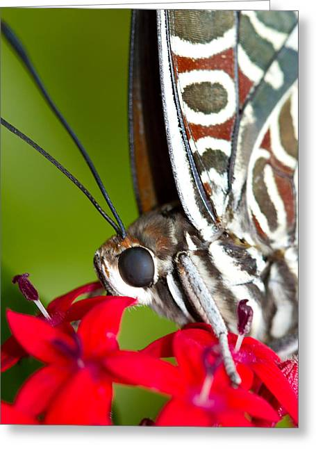Greeting Card featuring the photograph I See You Butterfly by John Hoey