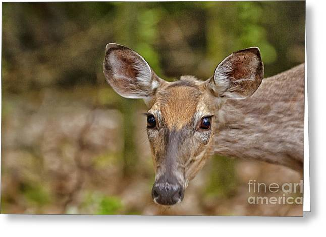 I See You Greeting Card by Timothy J Berndt