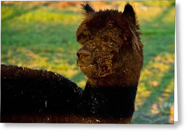 I Seez You Black Alpaca Portrait Greeting Card