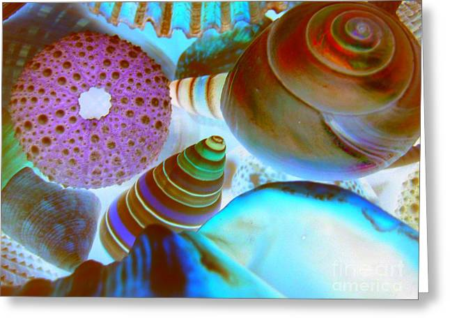 Greeting Card featuring the photograph I Sell Seashells Down By The Seashore by Janice Westerberg