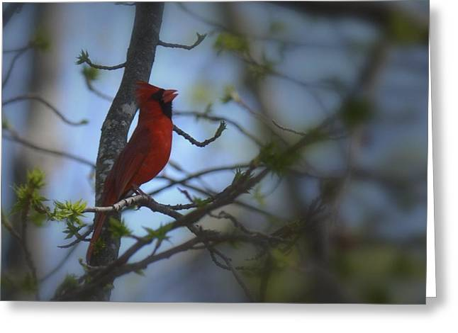 I Want To Sing A Song To You Lord Greeting Card by Maria Urso