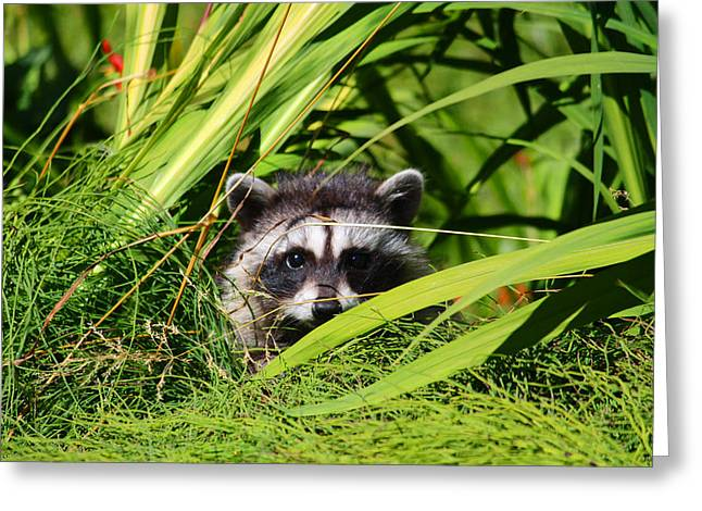 I Was Taking A Nap Greeting Card by Kym Backland