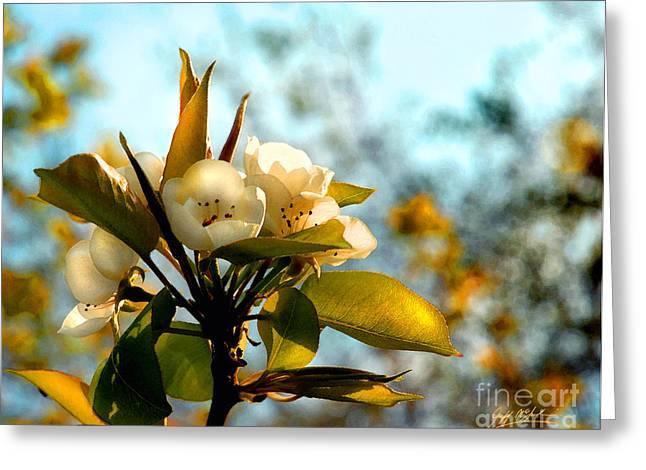Ian's Plum Blossom II Greeting Card