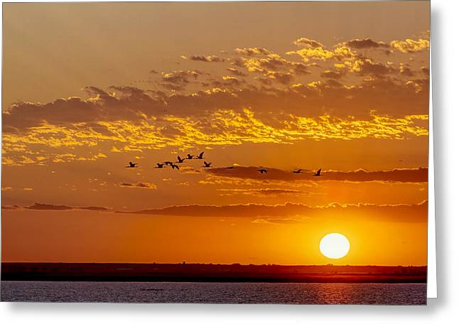 Greeting Card featuring the photograph Ibis Flyover At Sunset by Rob Graham