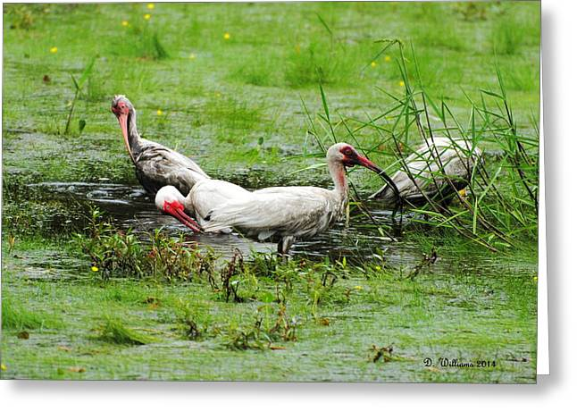 Ibis In Willow Pond Greeting Card