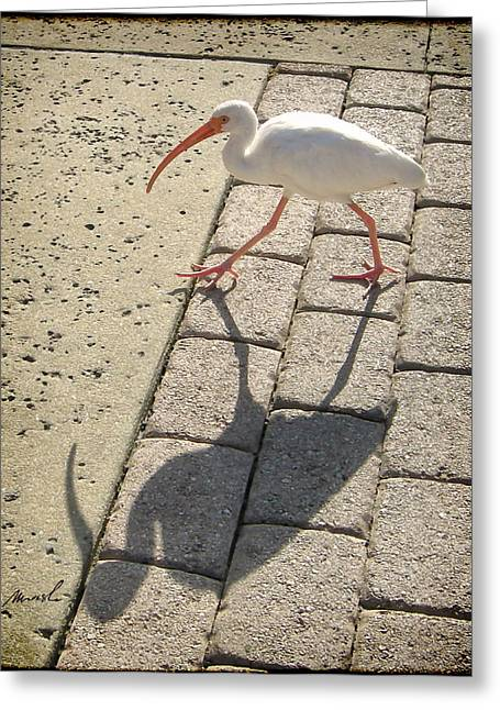 Ibis Greeting Card by The Art of Marsha Charlebois