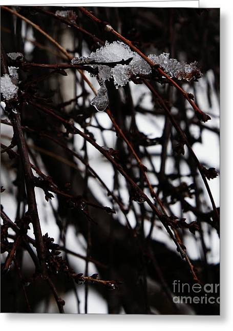 Greeting Card featuring the photograph Ice 2 by Linda Shafer