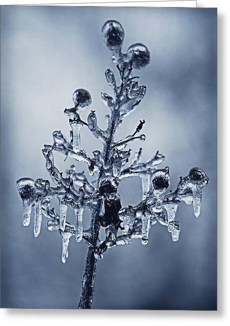 Ice Bouquet Greeting Card by Linda Segerson