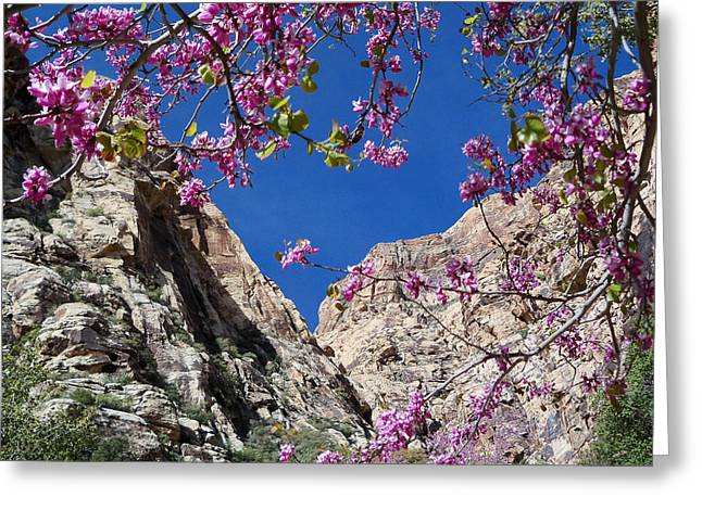 Ice Box Canyon In April Greeting Card