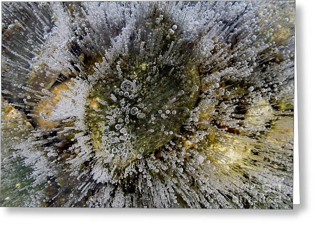 Ice Bubbles Greeting Card by Fred  Sheridan