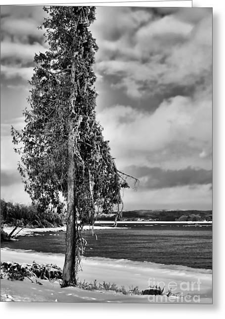 Ice Coated Tree Greeting Card