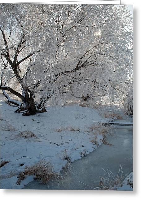Ice Covered Tree And Creek In Montana Greeting Card
