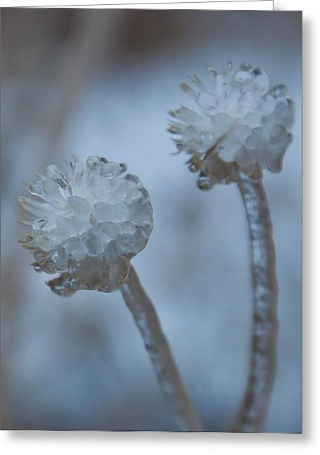 Greeting Card featuring the photograph Ice-covered Winter Flowers With Blue Background by Cascade Colors