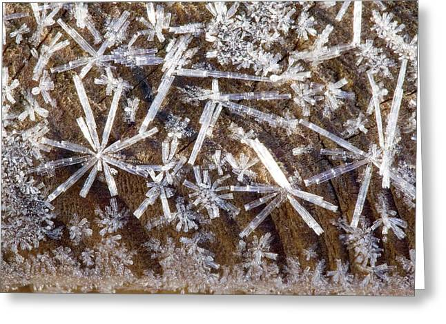Ice Crystals Greeting Card by Ashley Cooper