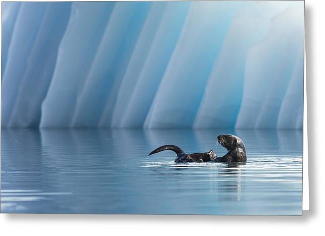 Otter Pop Greeting Card