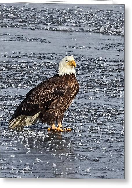 Ice Eagle Greeting Card