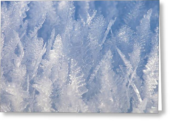Ice Feathers Greeting Card by Ashley Cooper