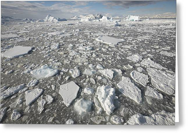 Ice Floes Antarctica Greeting Card