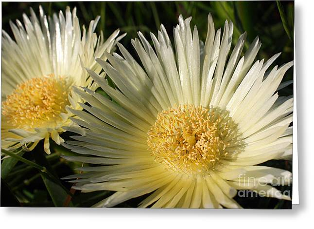 Ice Flowers Greeting Card