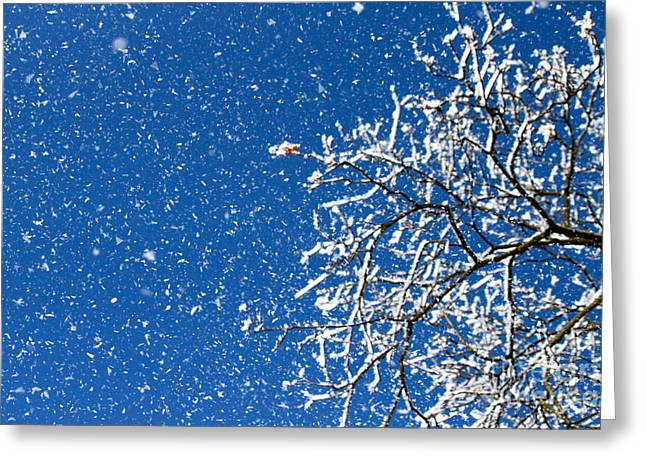 Ice In The Air Greeting Card by Jay Nodianos