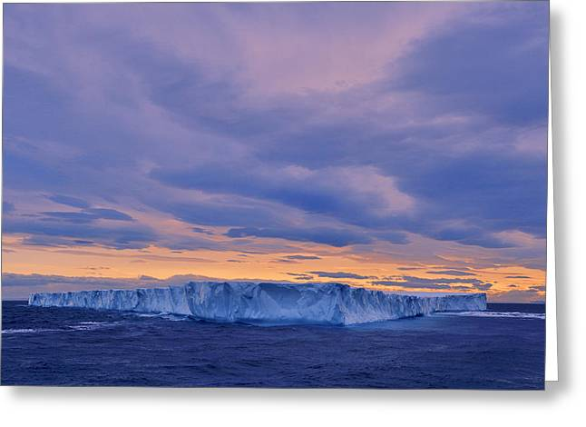 Ice Island Greeting Card by Tony Beck